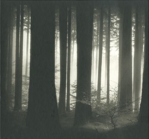 Helmut Hirler. Bäume.