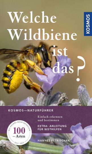 Welche Wildbiene ist das? Einfach erkennen und bestimmen.