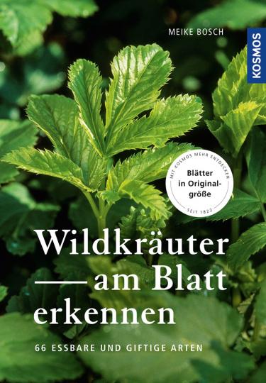 Wildkräuter am Blatt erkennen. 66 essbare Arten.