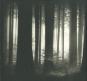Helmut Hirler. Bäume. Bild 1