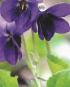 Blumengeschichten - Märchen für Herz und Seele Bild 2