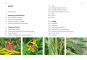 Das große BLV Handbuch Insekten. Über 1360 heimische Arten, 3640 Fotos. Bild 2