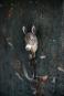 Deko-Haken »Esel«. Bild 2