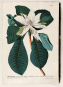 Die Bildgeschichte der Botanik. Pflanzendarstellungen des 15.-18. Jahrhunderts aus der Sammlung Christoph Jacob Trew. Bild 2