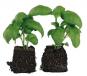 Küchenkräuter: Gestalten - Pflanzen - Ernten Bild 2