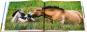 Przewalski Pferde. Bild 2