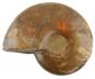 Ammolith groß, rot Bild 3