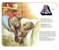 Das Buch vom Sandmann und das ABC vom Schlaf. Bild 3