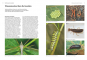 Das große BLV Handbuch Insekten. Über 1360 heimische Arten, 3640 Fotos. Bild 3