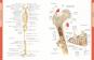 Die Anatomie des menschlichen Körpers Bild 3