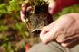 Handbuch Bio-Obst. Sortenvielfalt erhalten. Ertragreich ernten. Natürlich genießen. Bild 3