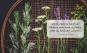 Räuchermomente im Jahreskreis. Die Kräfte der Wildpflanzen für sich nutzen. Bild 3