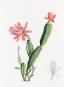 Alexander von Humboldt und die botanische Erforschung Amerikas. Bild 4