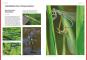 Das große BLV Handbuch Insekten. Über 1360 heimische Arten, 3640 Fotos. Bild 5