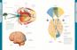 Die Anatomie des menschlichen Körpers Bild 5