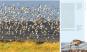 Die Küste. Lebensraum zwischen Land und Meer. Bild 5