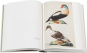 Johann Friedrich Naumann. Die Vögel Mitteleuropas. Eine Auswahl. Bild 5