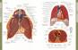 Die Anatomie des menschlichen Körpers Bild 6