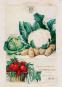 Geschichte der Gartenkultur. Von Blumisten, Kunstgärtnern, Mistbeeten und Pomologien. Bild 6