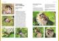 Das große BLV Handbuch Insekten. Über 1360 heimische Arten, 3640 Fotos. Bild 7