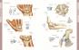 Die Anatomie des menschlichen Körpers Bild 7